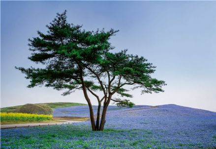 Photo wallpaper Tree In Blue Flower Field
